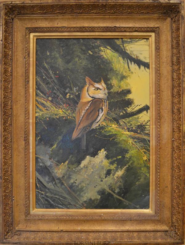 Eastern Screeching Owl